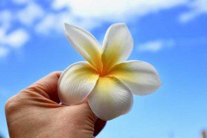 プルメリア ハワイ