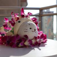 Hawaii201904