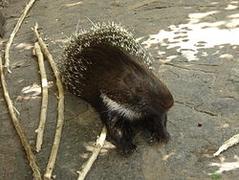 kipoka-animal