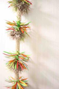 palmtreelei