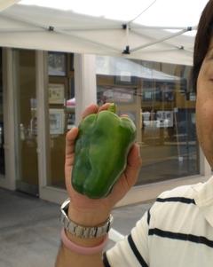 20131012-green pepper